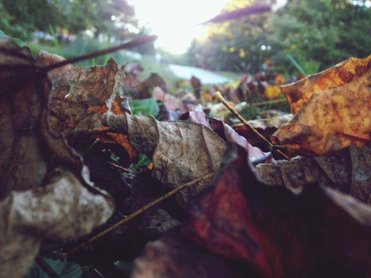 A Bug's Eye View of Fall