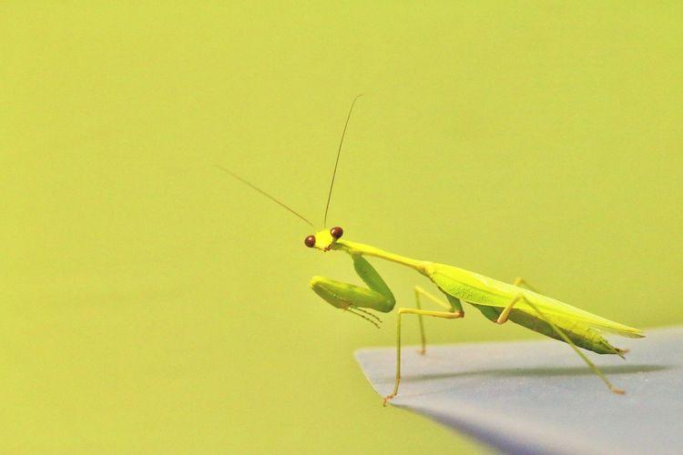 Lemon Lime By Motorola Grass Hopper Gud Nite Eyeem Luvphotography India Canon 70d