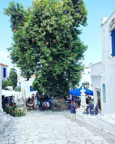 break for a coffee anyone? Tinos Pirgos Greece Summer VisitGreece Dailypic Pictureoftheday Bestoftheday Instapic Instacam Instagram Instagood Vscogrid Vscogreece VSCO Vscophile Huge Tree Green Blue Sky Amazing Tradition Square Vacations loveit f4f follow4follow likeforlike