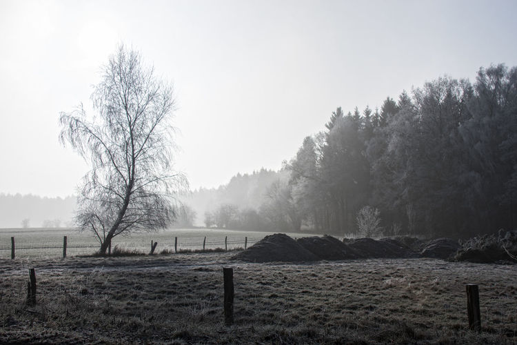 Wintertime Agriculture Beauty In Nature Day Farmland Fence Field Fog Foggy Morning Forest Landscape Nature No People North Germany Outdoors Scenics Schleswig-Holstein Sky Tranquil Scene Tranquility Tree Wintertime