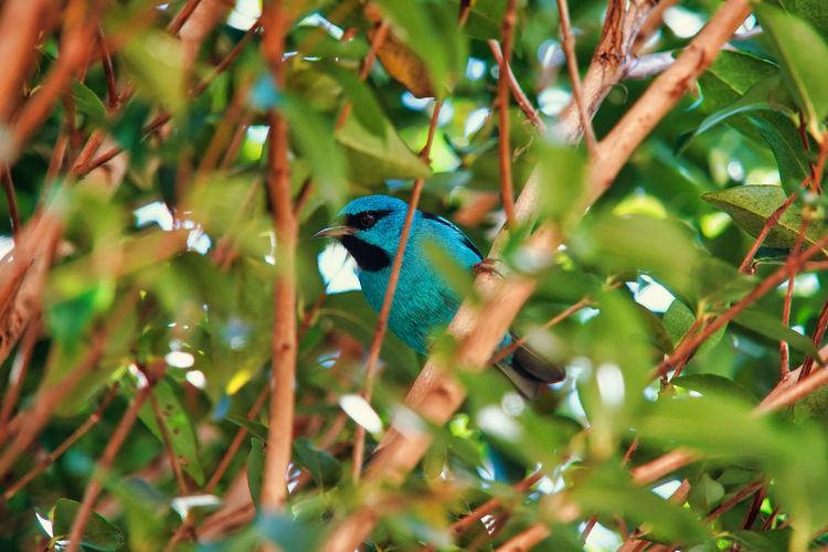 Bird perching on a tree