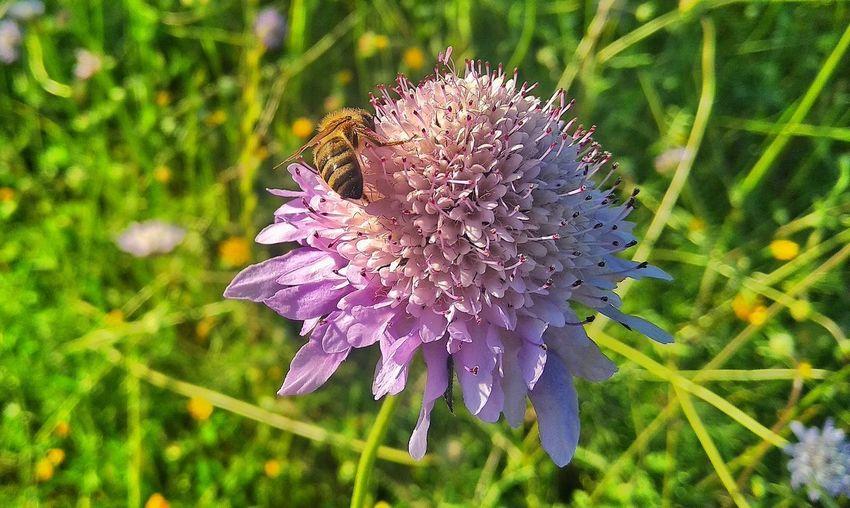 Flores Insectos