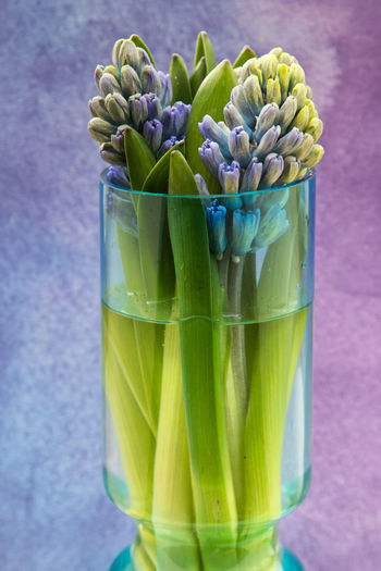 Green Color Freshness Close-up No People Plant Flower Beauty In Nature Still Life Flowering Plant Fragility Nature Focus On Foreground Indoors  Vulnerability  Growth Glass Purple Vase Hyacinth Nature_collection Still Life Photography EyeEm Best Shots EyeEm Nature Lover Frühling Nature Photography The Minimalist - 2019 EyeEm Awards