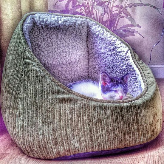 our kitten loves her new bed! x Hdr_Collection Lovecats Catsoneyeem Fun #instagramers #TagsForLikes #food #smile #pretty #followme #nature #lol #dog #hair #onedirection #sunset Swag Throwbackth [