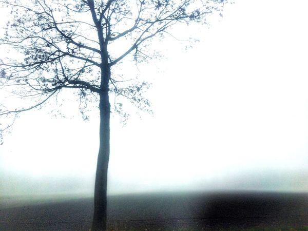 Deutschland Germany Bayern Tree Mist Fog Nature Mistery