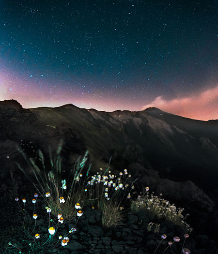 Etna Etna Volcano Astronomy Beauty In Nature Environment Flower Flowers On Etna Galaxy Growth Land Mountain Nature Night No People Outdoors Plant Scenics - Nature Sky Space Star - Space Tranquil Scene Tranquility Travel Destinations Volcano