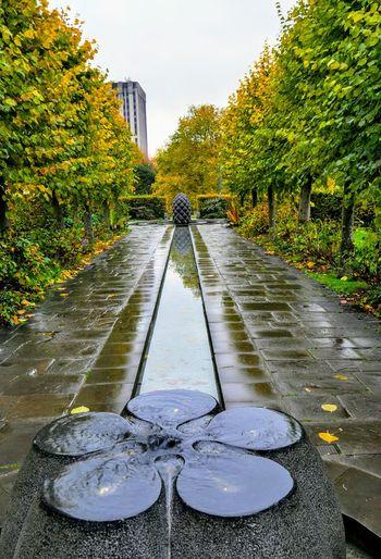 psychic garden Photowalktheworld EyeEm Selects Garden Photography Water Puddle Wet Tree Sky Rainy Season Diminishing Perspective