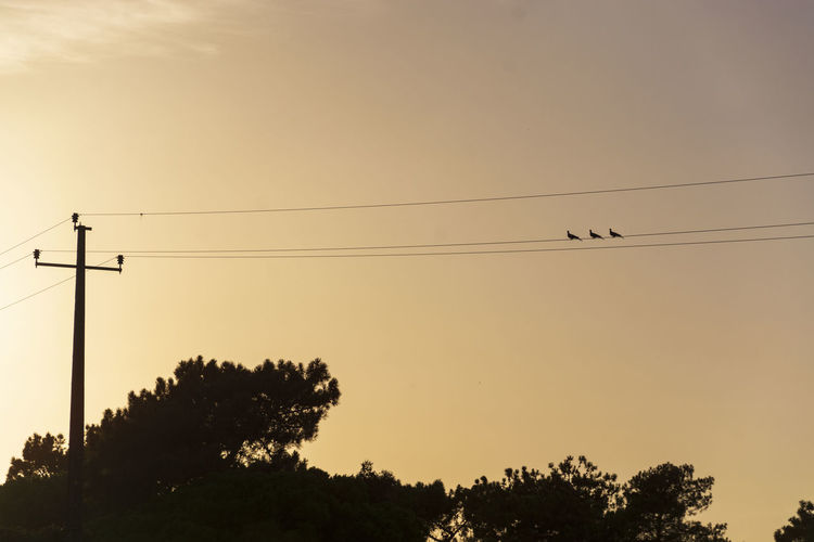 Low angle view of silhouette birds against sky during sunset