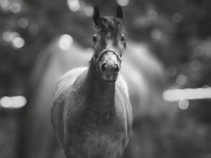 Horse Horse Photography  Horse Love Pony Equine Photography Equine Equine Art