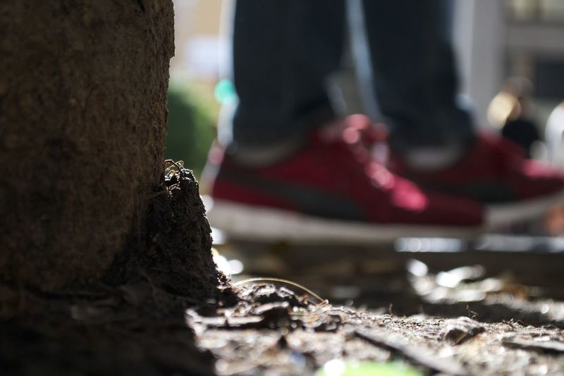 Runningshoes Red Shoes Nikes DTLA Groundlevel Dirt Tree Nikonphotography