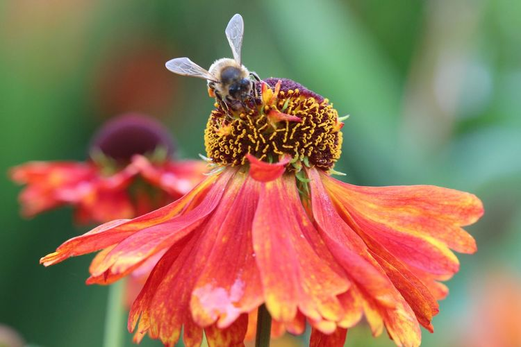 My Year My View Flower Nature Close-up Insect Flower Head Pollination Plant Pollen Beauty In Nature Juneblake Photooftheday Ireland 🍀 Gardening Garden Photography