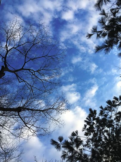 Low Angle View Tree Sky Nature Cloud - Sky Beauty In Nature Day
