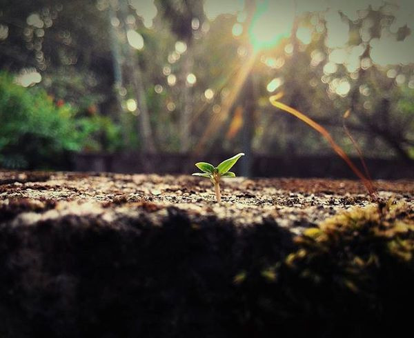 <<Miniature photos>> Miniature Focused Tinyplants Nature Sunrays Sunfilter Morning Zenfone Asus Pixelmaster Instaphoto Zenfoneglobal