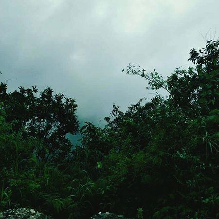 Fog, mountain