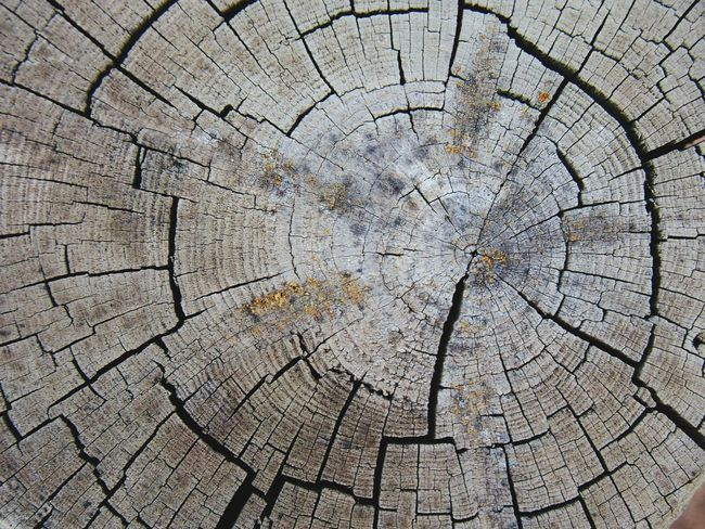 Years Deforestation Circle Detail Nature Wood - Material Tree Stump No People Botany Wooden Geometric Shape Patterns In Nature Circle Tree Trunk Outdoors Nature Textured