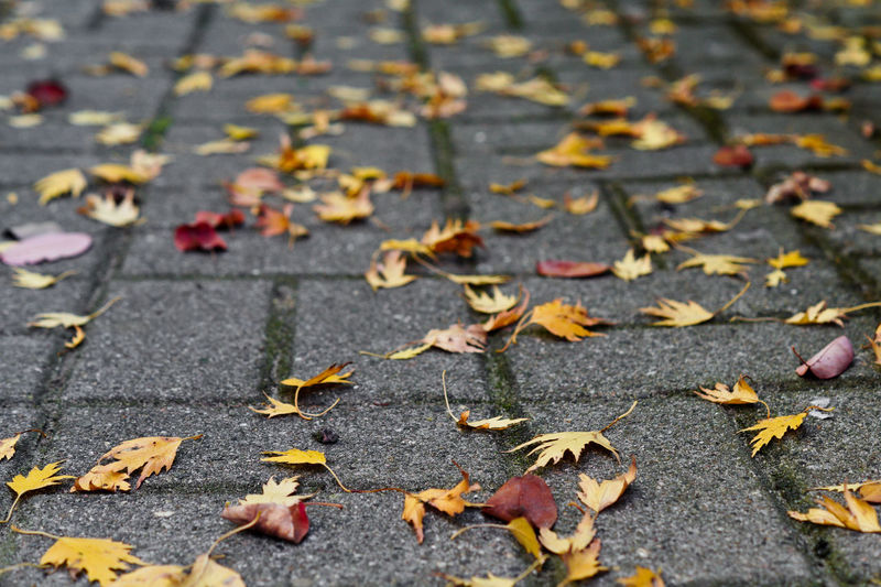 Autumn Autumn colors Autumn Leaves Leaves Leaves🌿 Leaf Plant Part Change Falling Dry Day Nature No People Footpath Close-up High Angle View Fragility Selective Focus Vulnerability  City Street Beauty In Nature Outdoors Maple Leaf Natural Condition Fall Autumn Collection Paving Stone Autumn Mood