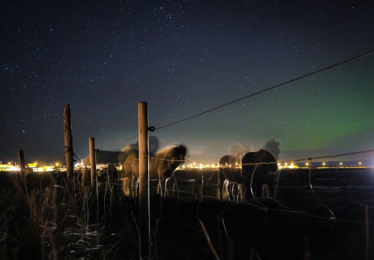 Horses standing on landscape against sky at night