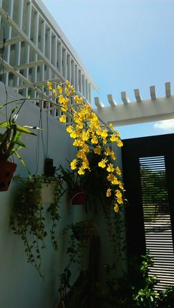 Orchid Orchid Blossoms Orchid Flower Sunlight ☀ City Life Outdoors