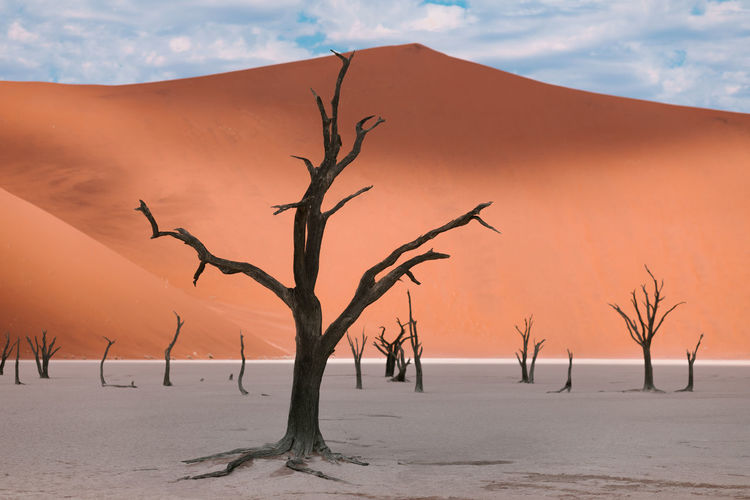 Dry trees among dunes in the namibian landscape at deadvlei
