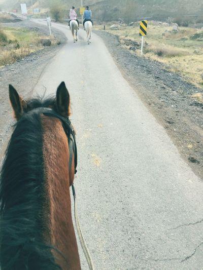 Eyem Select EyeEmNewHere Horse Horses EyeEmNewHere EyeEmNewHere