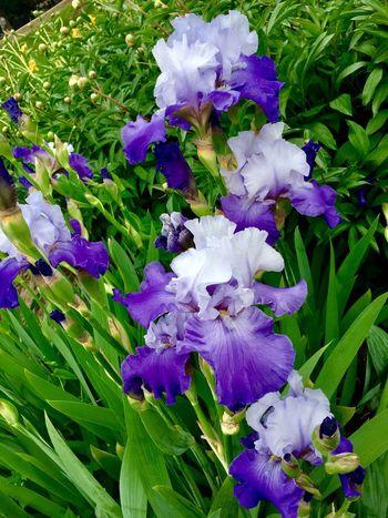 Flower Purple Nature Beauty In Nature Montréal