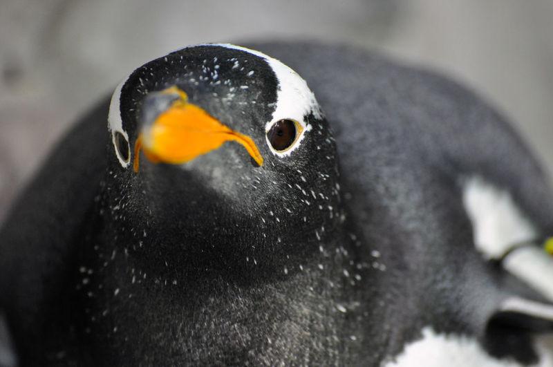 Close-up of bird looking away