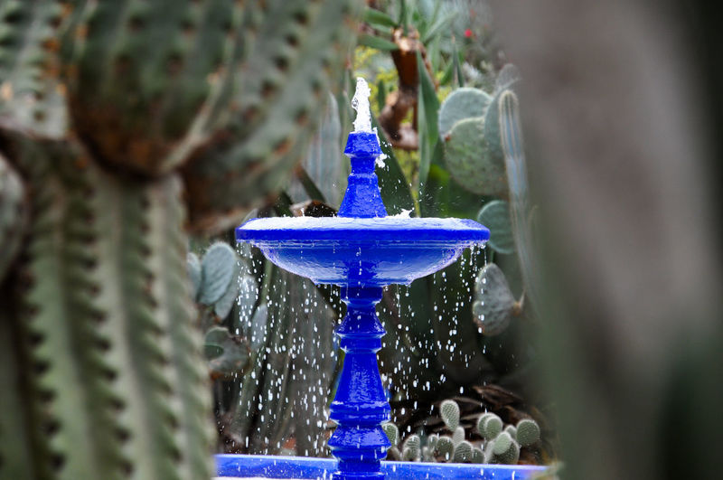 Close-up of potted plant on fountain in garden