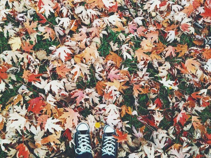 Human Feet In Trainers Among Autumnal Leaves