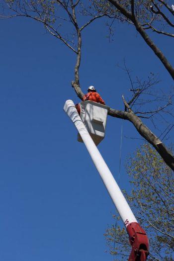 Tree Trimmer Business Stories Business Stories