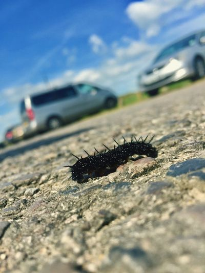 Insect Animal Themes Animals In The Wild Selective Focus Day Outdoors No People Close-up One Animal Animal Wildlife Nature Sky Caterpillar ShotOniPhone6