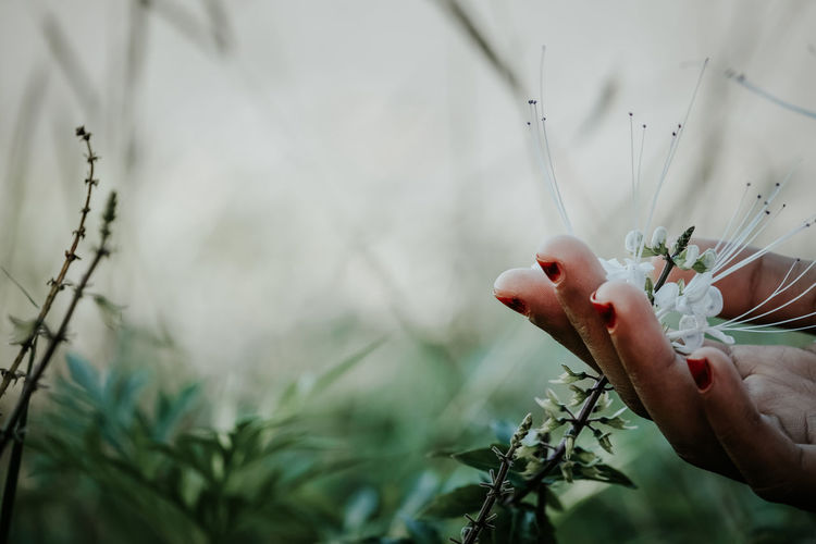 Person holding flowering plant against blurred background