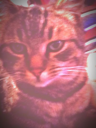 Cat Whatthehell Gooutpeople Sweet Mylove MyLittleCat 💕 🐱 ZseDY
