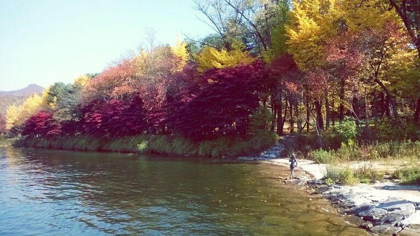 South Korea Nami Island , Korea Fall Beauty Colors