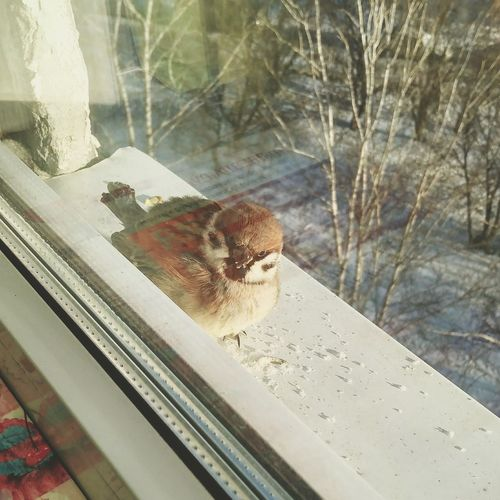 One Animal Animal Themes Animal Wildlife Animals In The Wild Window Day No People