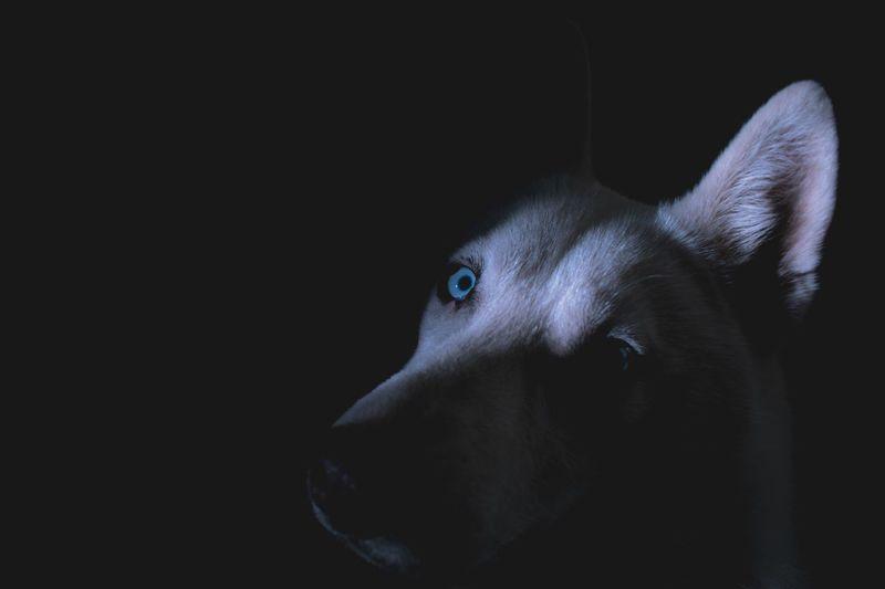 Pets Black Background One Animal Animal Body Part Dark Close-up Dog Animal Themes Human Body Part People
