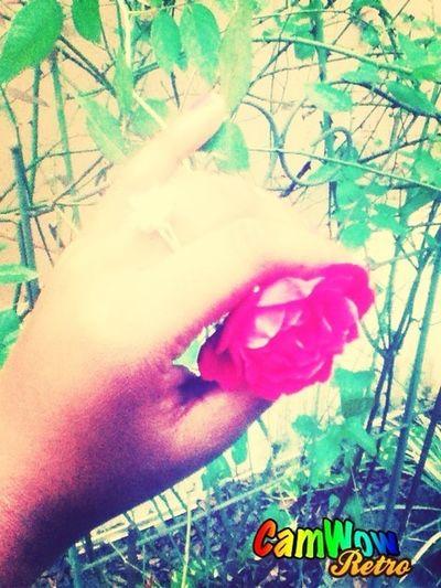 Pretty Flower I Found <3