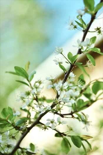 Flower Head Tree Flower Branch Defocused Springtime Leaf Multi Colored Summer Uncultivated