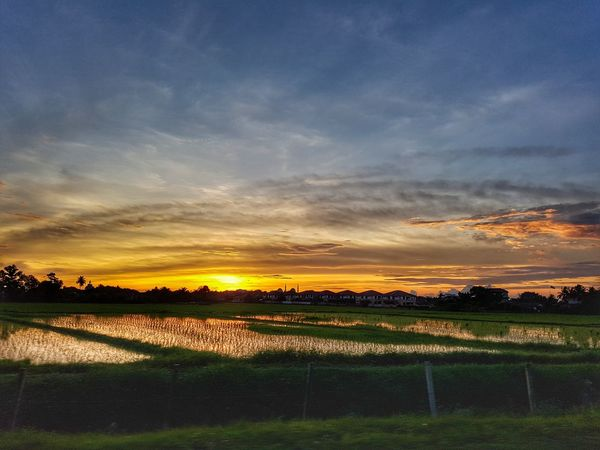 Sunset over paddy field in Kedah, Malaysia. Paddy Field Kedah Malaysia Tree Sunset Rural Scene Field Agriculture Sky Landscape Cloud - Sky Parallel