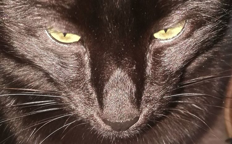 One Animal Domestic Cat Animal Themes Feline Pets No People Backgrounds