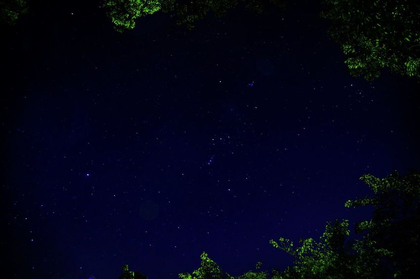 Orion caught in the forest Star - Space Astronomy Night Low Angle View Space And Astronomy Galaxy Star Field Nature Constellation Tranquil Scene Tranquility Sky Space No People Beauty In Nature Outdoors Tree Scenics Milky Way Forest Forest Photography Perspectives On Nature