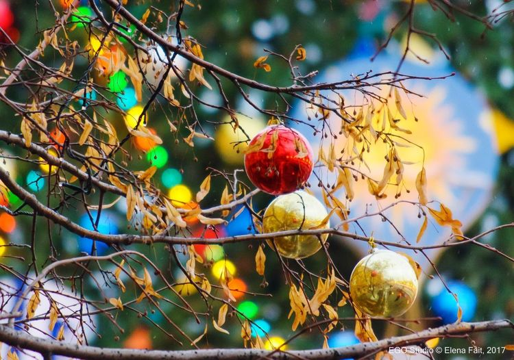 Happy New Year in Moscow Blue Green Color Orange Color Red Color Moscow Tree Holiday Fun Joy Life Happiness New Year Toys Fruit Food And Drink Food Tree Nature No People Day Close-up Healthy Eating Sky