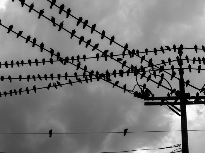 Flock of birds perching on cables attached on electric pole against sky