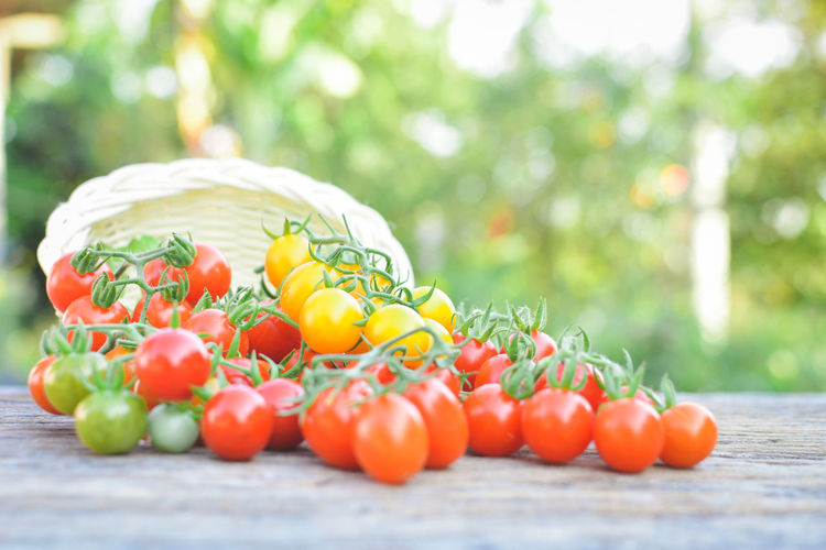Close-up of cherry tomatoes spilling from basket on table