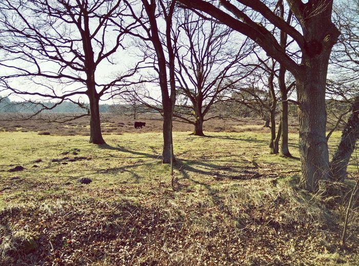 Landscape Drenthe Nature
