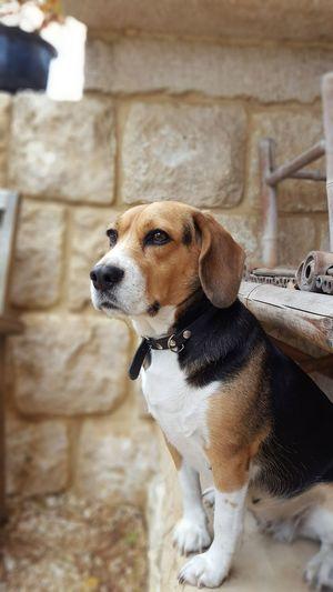 Fierté Dog Pets