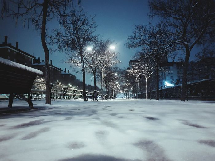 Snow covered trees against sky at night