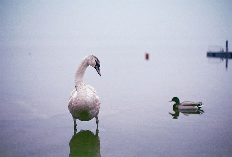 Animal Avian Beauty In Nature Bird Close-up Day Focus On Foreground Lake Nature No People Outdoors Reflection Rippled Sky Tranquility Water Water Bird