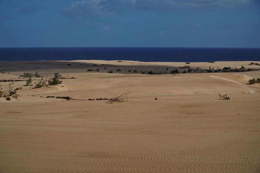 c9 Fuerteventura Animal Themes Arid Climate Beauty In Nature Blue Corralejo Day Desert Landscape Mammal Nature No People Outdoors Sand Sand Dune Scenics Sky Tranquil Scene Tranquility