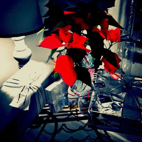 Nochebuena 2014 MexicanTradition Plants
