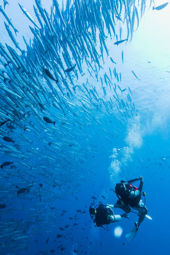 Underwater view of scuba divers swimming with fish in sea